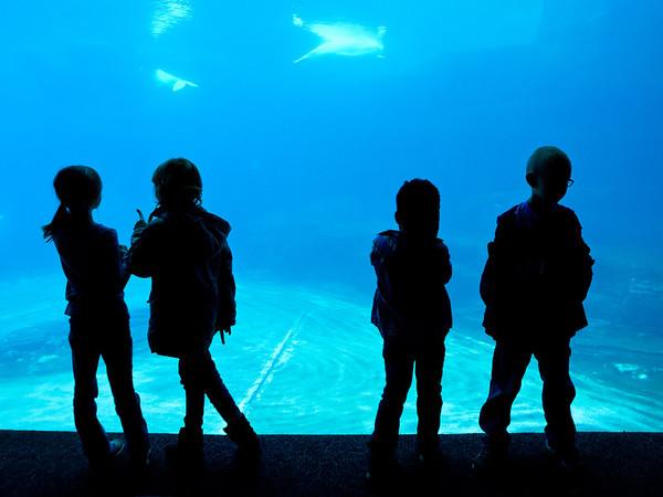 2012 FGrade 1 Trip to the Aquarium
