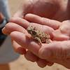 Family picnic at Palo Duro Canyon (9.7.09) A horny toad!