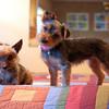 Daisy & Joe (9.8.11)