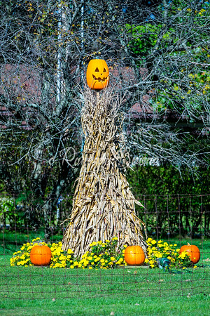Pumpkins and Corn Stalks