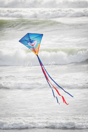 Kite on the Beach