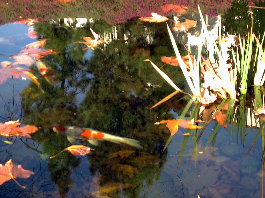 Week 02: Scripps Pond, SDSU. First day back at work.