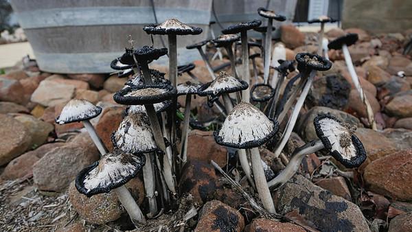 Fungi13
