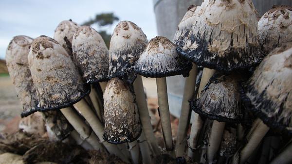 Fungi03