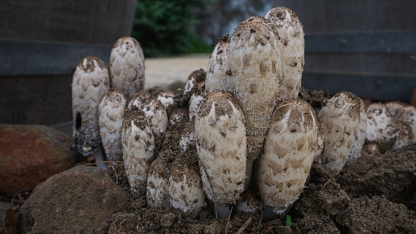 Fungi04