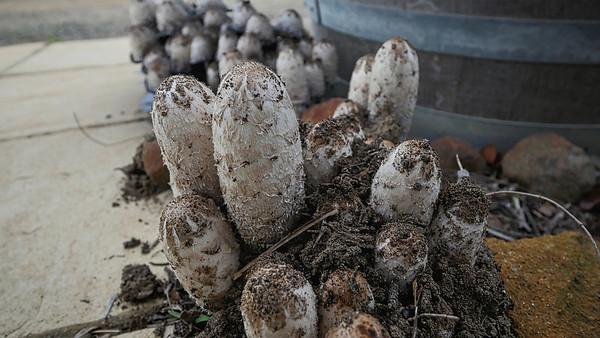 Fungi12
