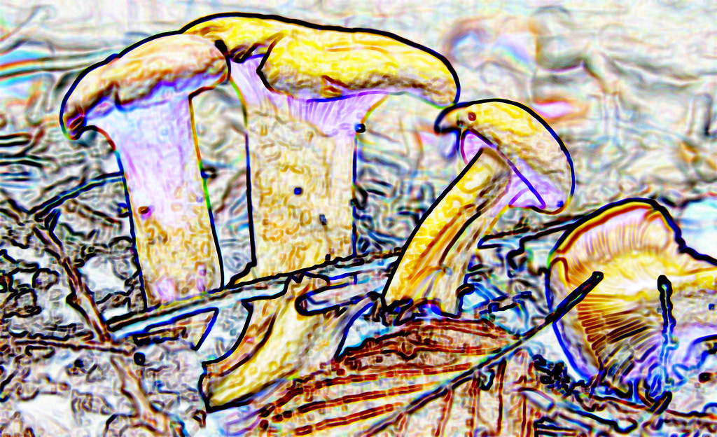 Cantharellus cibarius - Chanterelle<br /> Photo manipulated with Photoshop