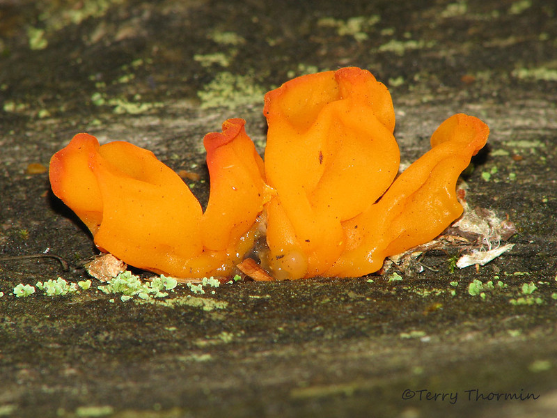 Unidentified jelly fungus
