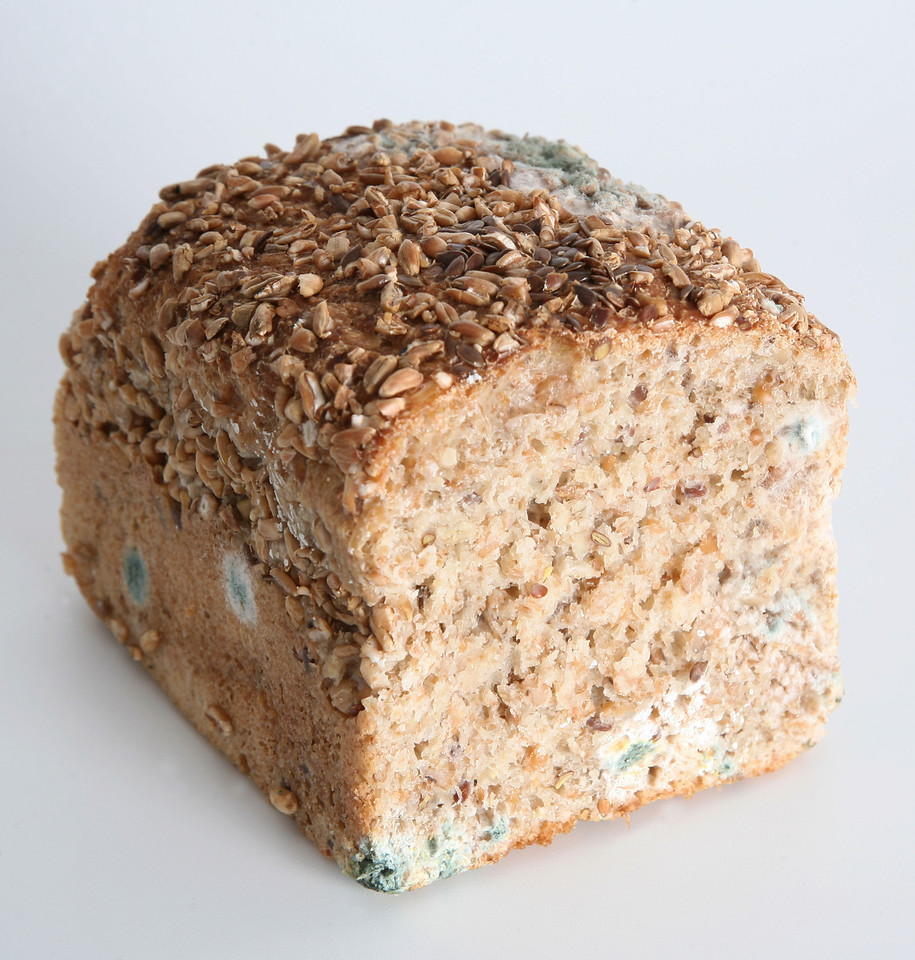 Mould on whole wheat bread