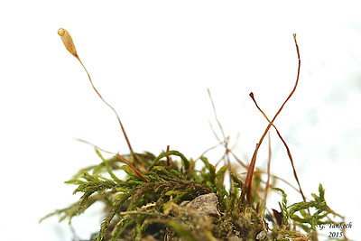 Necklace Chain Moss
