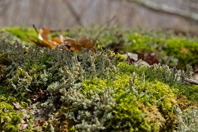 Small Lichens and mosses.