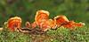 Bracket fungus - Comox, B.C.