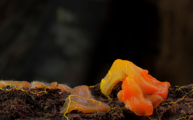 The slime mould wins