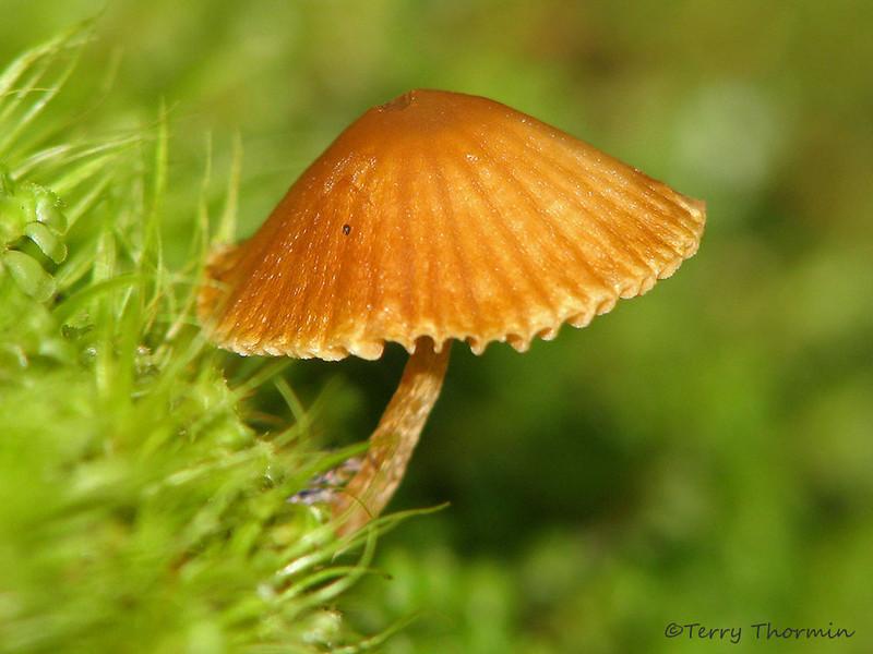 Mushroom - Little Qualicum Falls P.P., Vancouver Island, B.C.