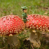 Amanita muscaria and Ranger Rick