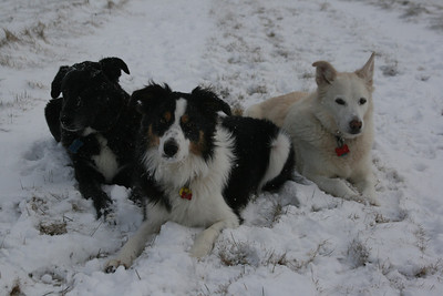 SOME PICTURES OF THE GANG!  Shep, Jayce, Salty