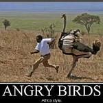 Funny Bird Cartoons