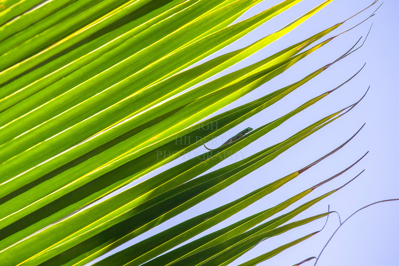 GeckoWorldGecko perched palm frond
