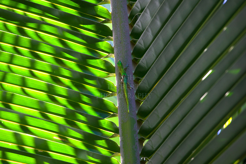 Gecko between light and dark palm frond