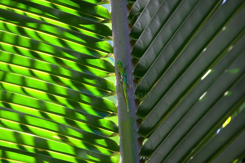 Gecko between light and dark palm frond
