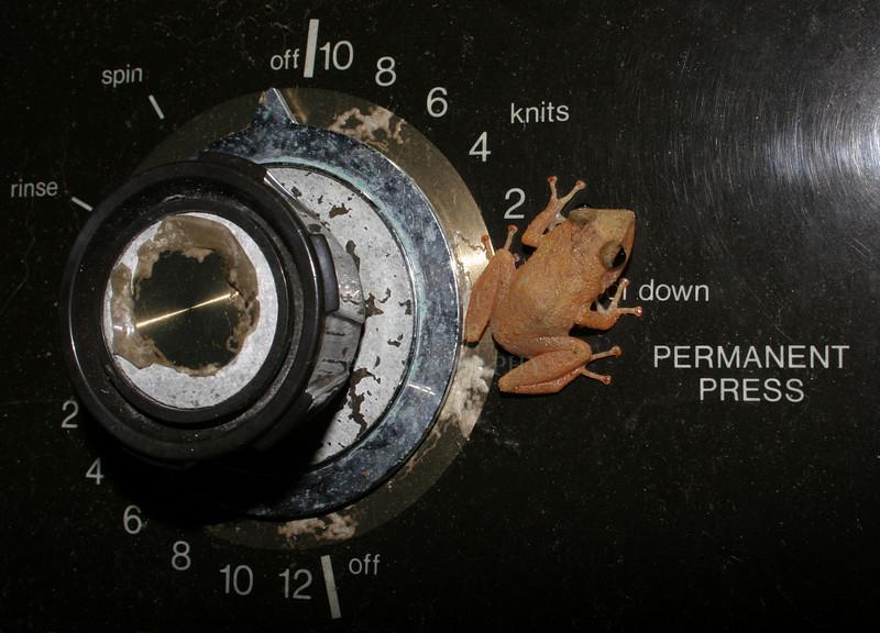 Coqui frog selection dryer settings