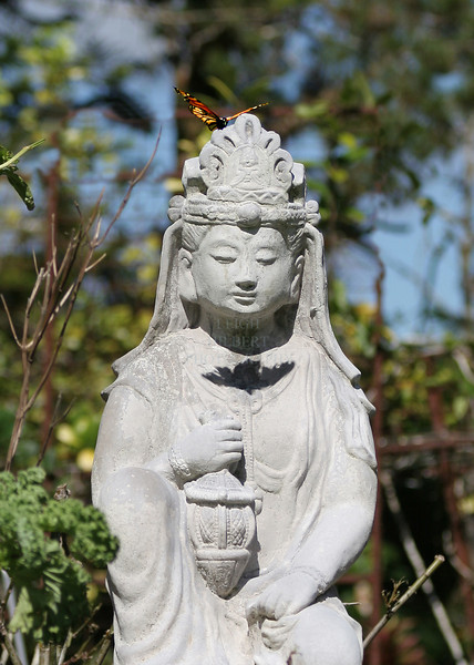 Kwan Yin Greets Butteryly #one<br /> <br /> I liked how the butterfly cast her shadow across Kwan Yin's heart<br /> <br /> Modern viewpoint: Kwan Yin: Goddess of Mercy & Compassion. Her esoteric attributes are those of compassion, healing, and centering.