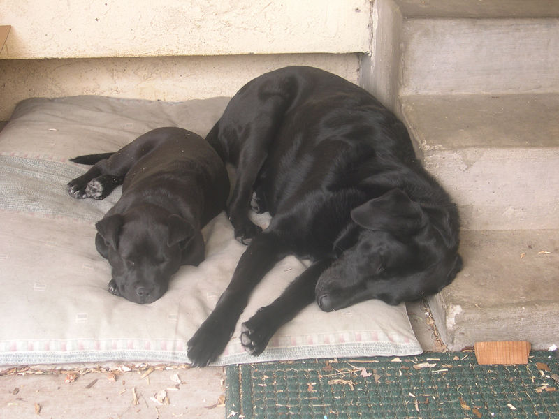 On the porch, you can use the step as a pillow