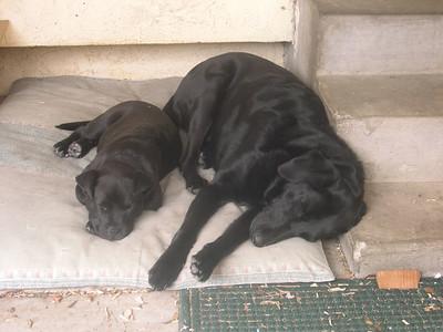Learning to Sleep Like a Big Dog