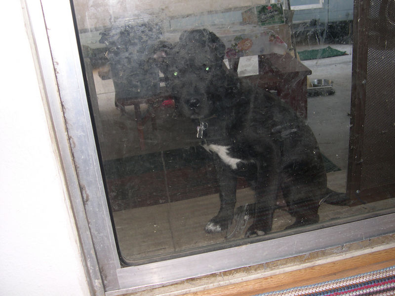 Can I come in, phuleeeeeeeze?  Sheesh!  Look at all the dog slobber on that door.