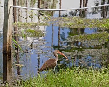 Birds of Stephen Foster State Park