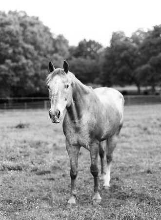 Nacho the horse