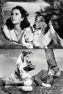 Lassie with Roddy McDowall and Elizabeth Taylor in Lassie Come Home 1943