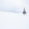 """ Christmas Tree """