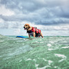 DSC05964 David Scarola Photography, Furry Friends Dog Surfing Competition 2016, Event Photography in Palm Beach County
