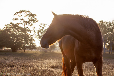 Horse @ Sundown