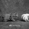 Leopard pretender vs Pig lookalike!