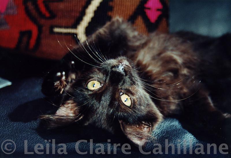 Chloe in her favorite upside down pose