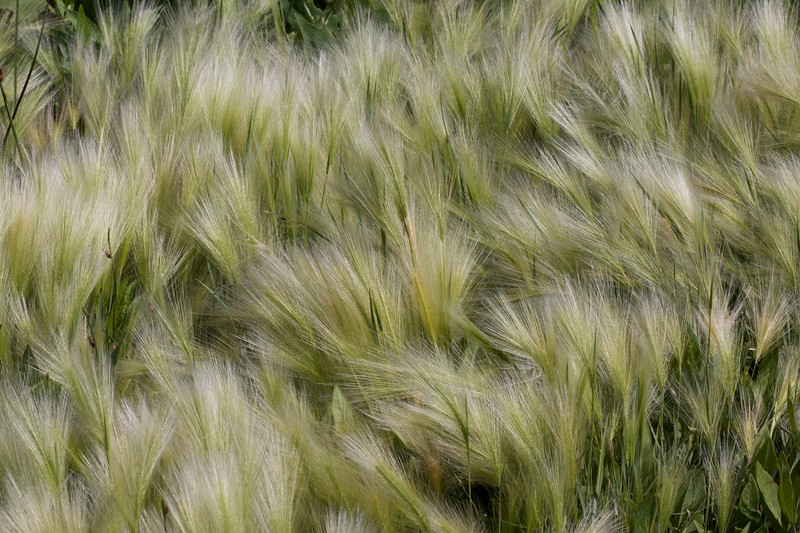Windy Grasses