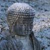 Frosty Buddha