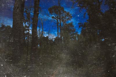 Forest_Night_DeepBlue