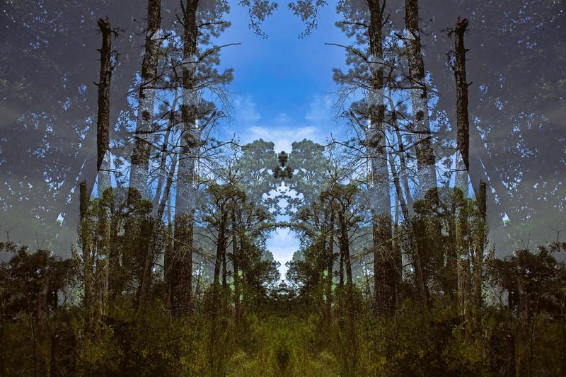Forest_Night_Mirror_2