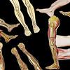 LEGS_Collage