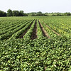 Crops_Midwest