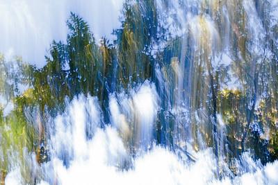 Trees_Mystic