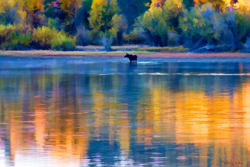 moose @ oxbow