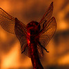 dragonfly in firelight