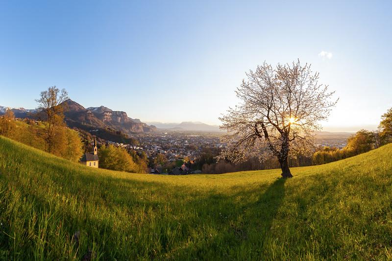 Kirschbaum oberhalb von Dornbirn