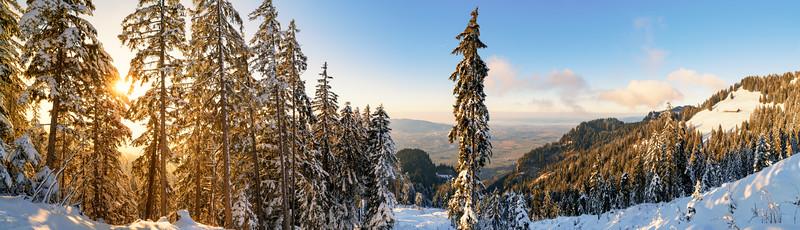 Sonnenuntergang im Kugelwald oberhalb von Hohenems