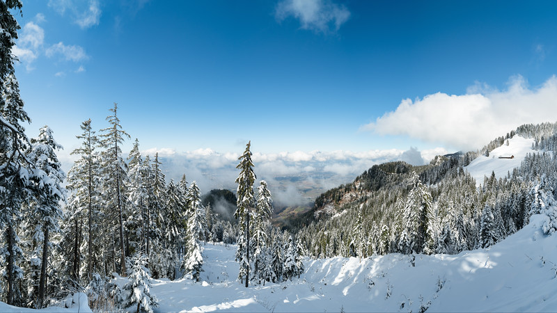 Im Kugelwald mit Blick Richtung Hohenems