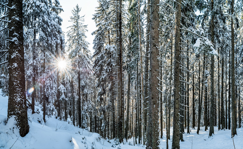 Im Kugelwald